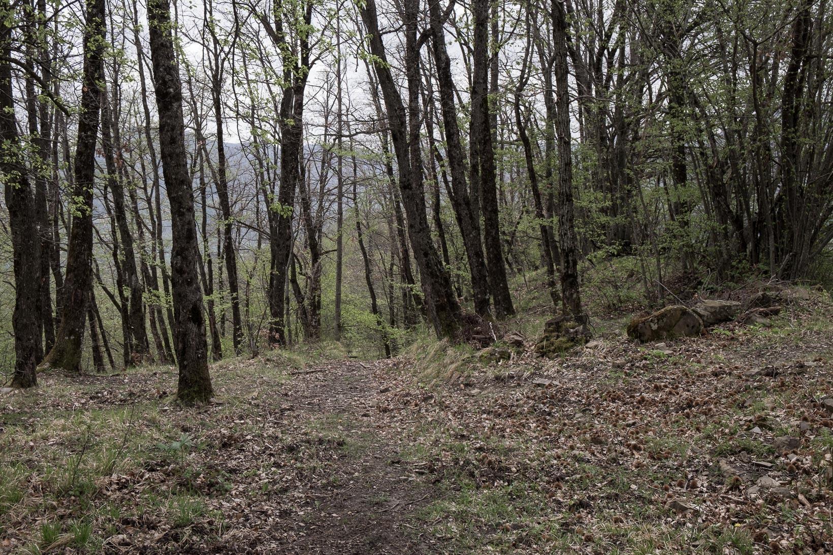 Monte-Belvedere-2