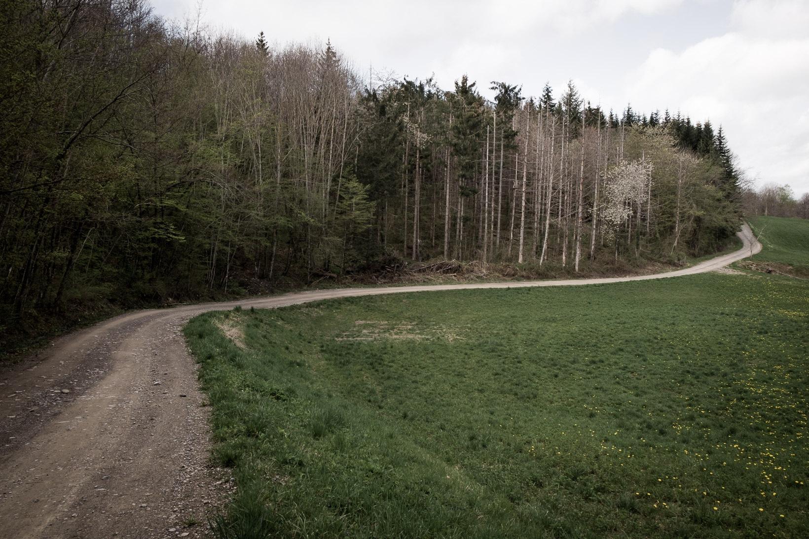 Monte-Belvedere-versante-nord-retrovie-tedesche-2