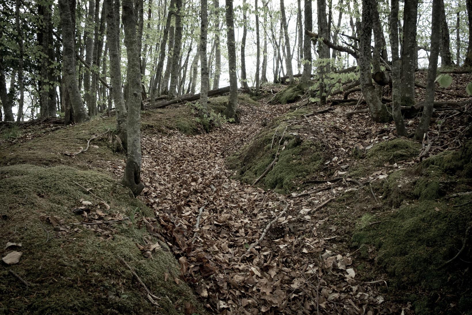 Monti-della-Riva-i-camminamenti-coperti-di-foglie-delle-truppe-tedesche