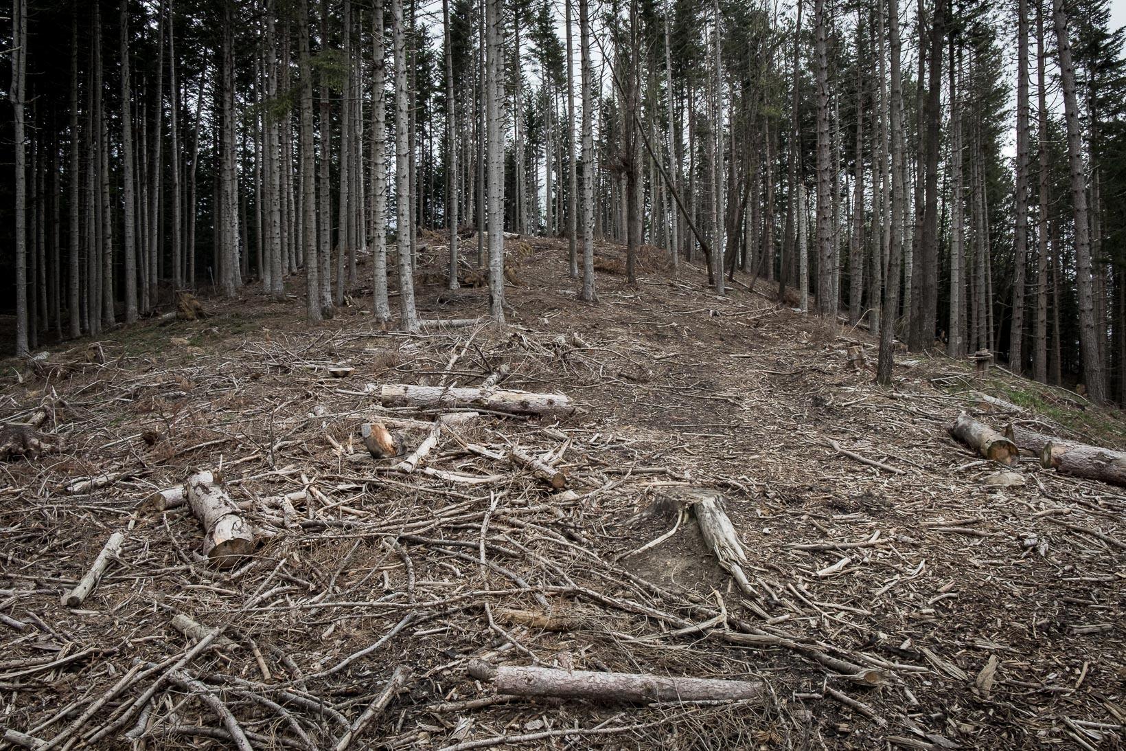 il-crinale-di-Ranchidoso-a-partire-dalla-tarda-estate-del-1944-fu-interamente-fortificato-dai-tedeschi-con-una-fitta-rete-di-postazioni-collegate-da-camminamenti