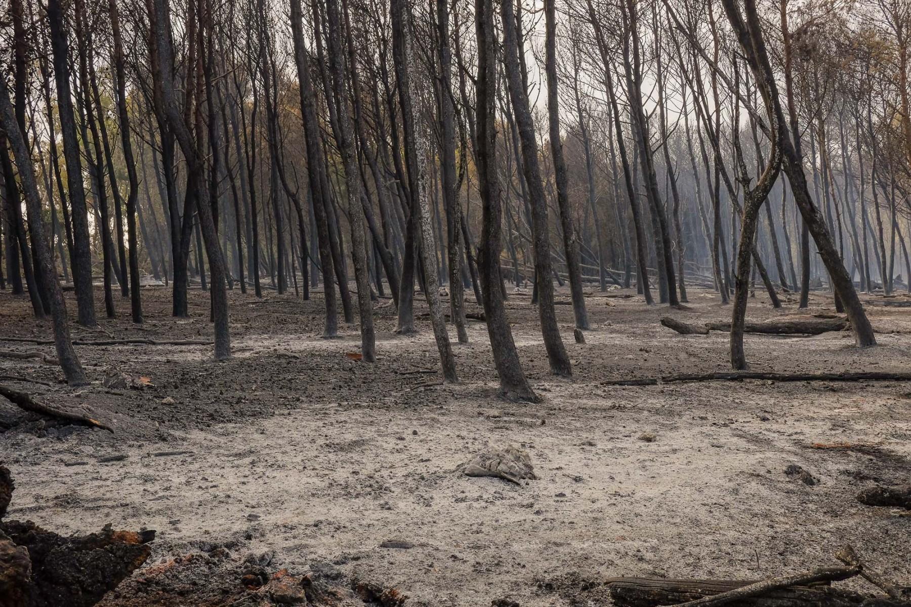 Puglia-2019.-A-sud-di-Otranto-una-ampia-zona-di-macchia-mediterranea-a-causa-di-un-incendio-di-origine-dolosa